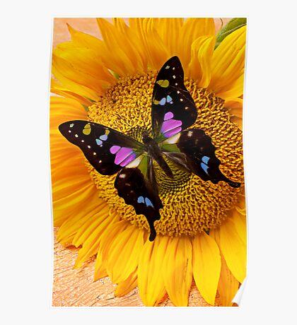 Purple Butterfly On Sunflower Poster