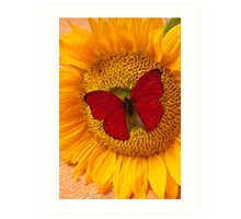 Red Butterfly On Sunflower Art Print