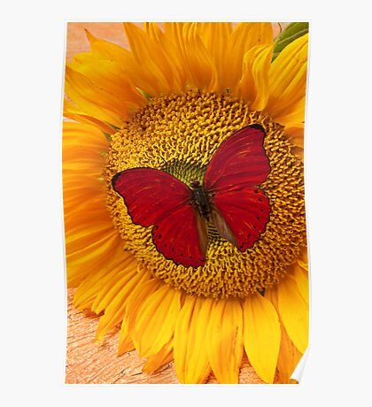 Red Butterfly On Sunflower Poster