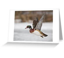 Flight of the Male Wood Duck Greeting Card
