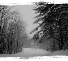 """""""Winter of 2011"""" by Elfriede Fulda"""