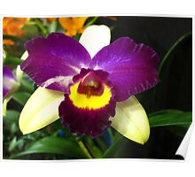Vibrant Orchid Poster