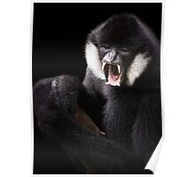 Black Crested Gibbon Poster