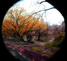 Central Park by Melissa Ann Blair