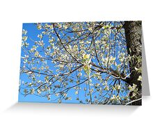 Dogwood Tree Beginning To Bloom Greeting Card