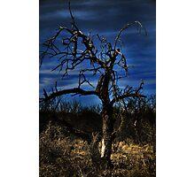 Night Falls Photographic Print