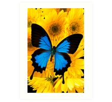 Blue Butterfly On Yellow Mums Art Print