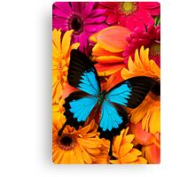 Blue Butterfly On Colorful Daisy's Canvas Print