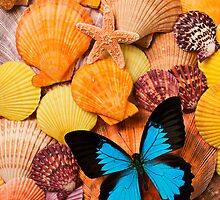 Blue Butterfly And Sea Shells by Garry Gay