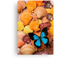 Blue Butterfly And Sea Shells Canvas Print