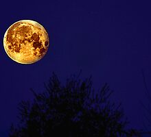 Pedigree Moon by Kevin Hertle