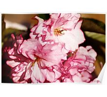 Cherry Blossom Pink Poster