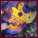 Fallen Maple Leaf by ©The Creative  Minds
