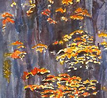Fungi of the Grampians by Kay Cunningham