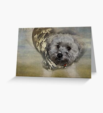 Adventure Pup Greeting Card