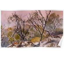 Mist in the Grampians National Park Poster