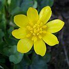 Little Yellow by Nella Khanis