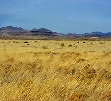 Table Butte ~ Southwest New Mexico by Vicki Pelham