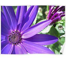 Majestic Purple Poster
