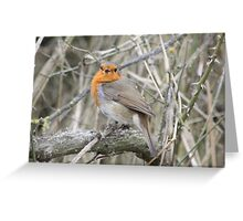 Vocal Robin Greeting Card
