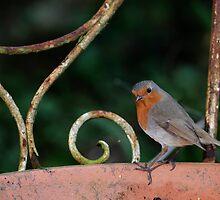 Robin, The Rower, County Kilkenny, Ireland by Andrew Jones
