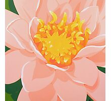 Tranquil Water Lily Photographic Print