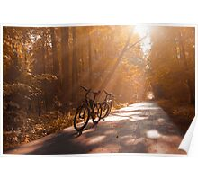Morning Autumn Forest Poster