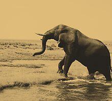 Elephant by shelyer