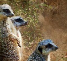 Meerkats by Eve Parry