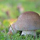 Amanita Rubescens by relayer51