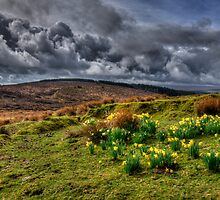 Springtime on the moors  by Rob Hawkins