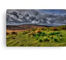 Springtime on the moors  Canvas Print
