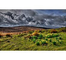 Springtime on the moors  Photographic Print