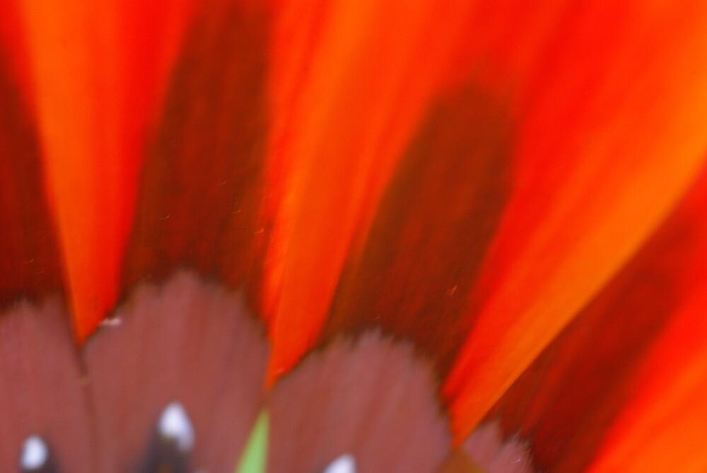 Floral Marvel by reuphiri