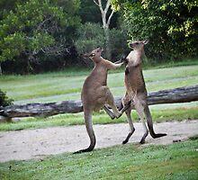 Kick Boxing 2 by BoB Davis