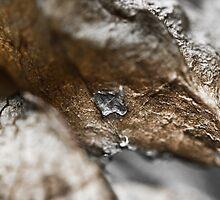 Gold n Silver Leaf Series #1 by Su Walker