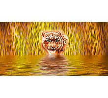 Tiger Upon Reflection Photographic Print