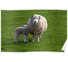 Exmoor`s New Born Lamb & Ewe Poster