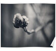 Spring Droplets Poster