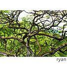Waimea Tree, Oahu Hawaii by Ryan Epstein