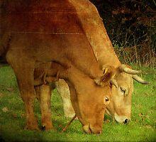 Cows by rentedochan