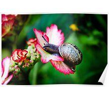 Snail on a Hydrangea Poster