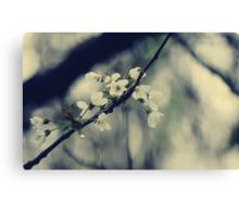 Focus on Spring Canvas Print