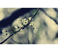 Focus on Spring Photographic Print