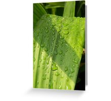 Morning Rain Greeting Card