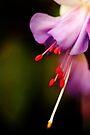 Dream of purple softness by steppeland