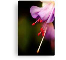 Dream of purple softness Canvas Print