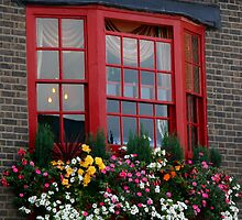 Red Window by Segalili