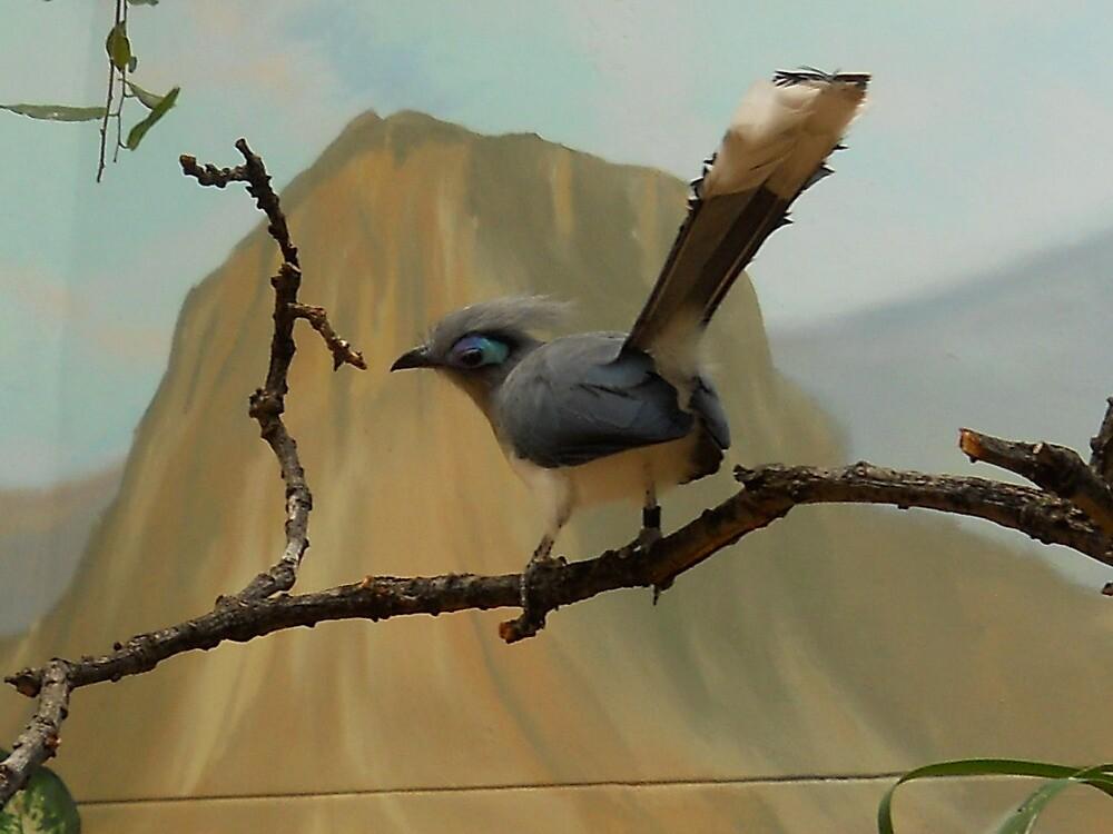 Odd bird in the zoo by froogl