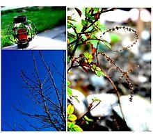 Garden Notes Photographic Print